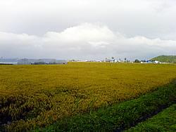 台風通過直後の東川町の水田